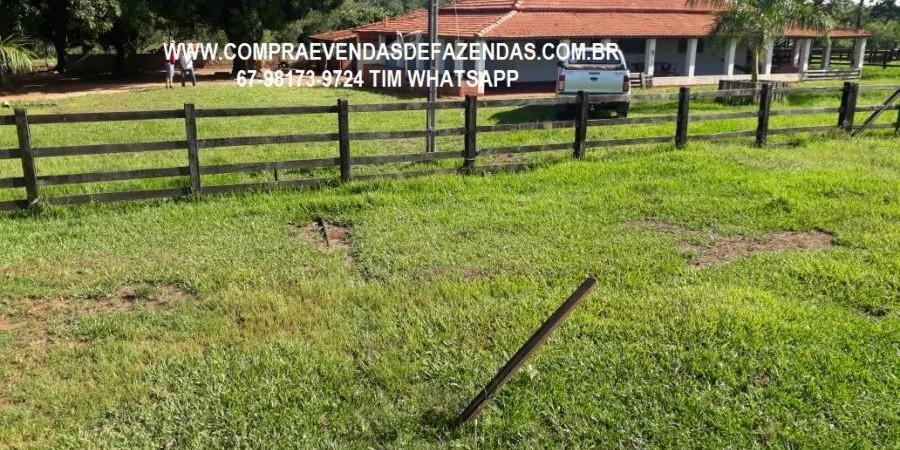 FAZENDA À VENDA CASSILÂNDIA – MS - Foto 3 de 10