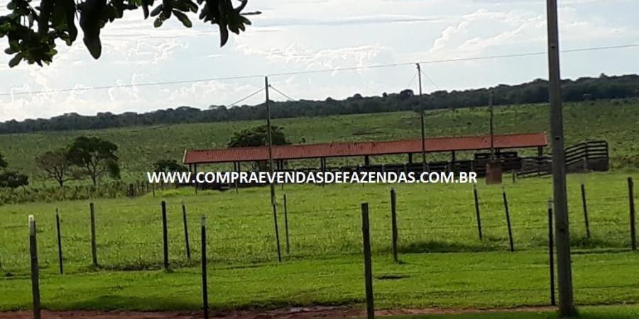 FAZENDA À VENDA  TRÊS LAGOAS MS - Foto 14 de 14