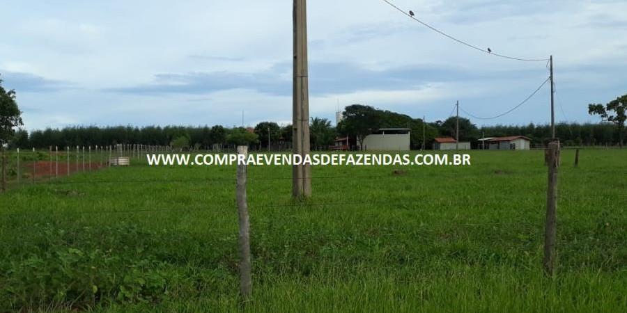 FAZENDA À VENDA  TRÊS LAGOAS MS - Foto 6 de 14