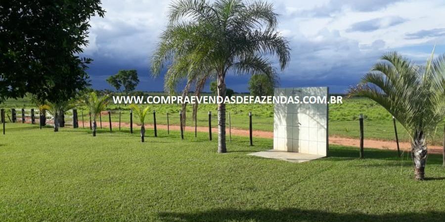 FAZENDA À VENDA  TRÊS LAGOAS MS - Foto 7 de 14