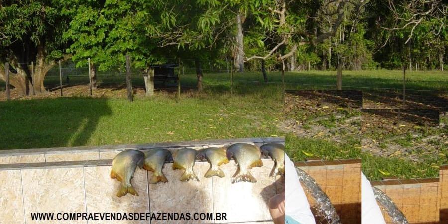 FAZENDA A VENDA NO  INOCÊNCIA MS - Foto 18 de 21
