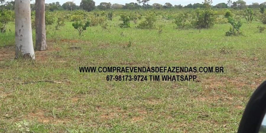 FAZENDA A VENDA NO  INOCÊNCIA MS - Foto 3 de 21