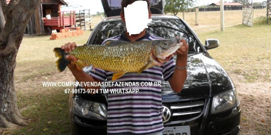 FAZENDA A VENDA NO  INOCÊNCIA MS - Foto 14 de 21