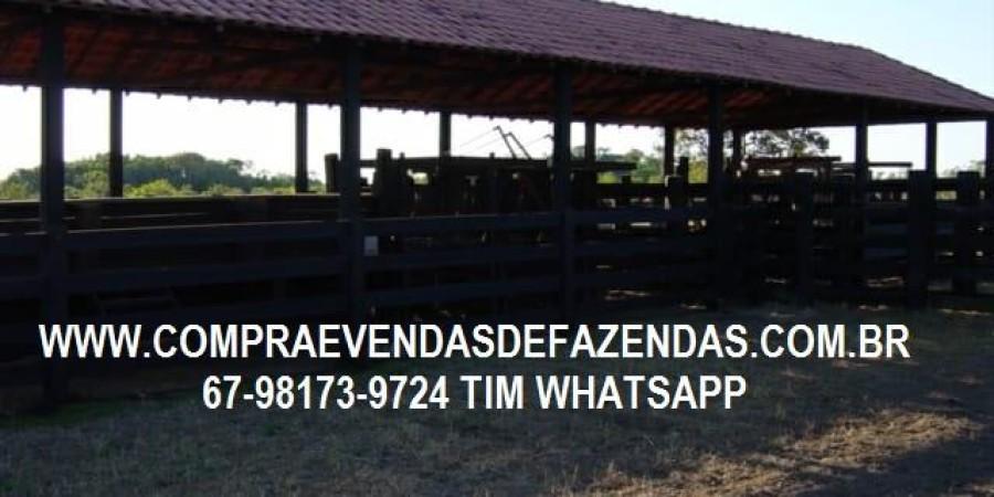 FAZENDA A VENDA NO  INOCÊNCIA MS - Foto 15 de 21