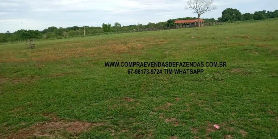 FAZENDA A VENDA NO  INOCÊNCIA MS - Foto 17 de 21