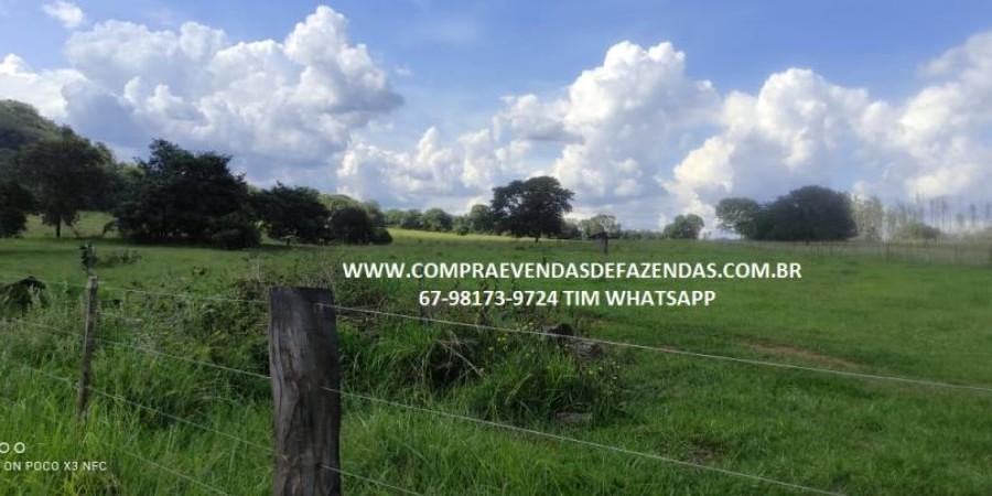 FAZENDA A VENDA NA REGIÃO POXORÉO MT - Foto 11 de 29