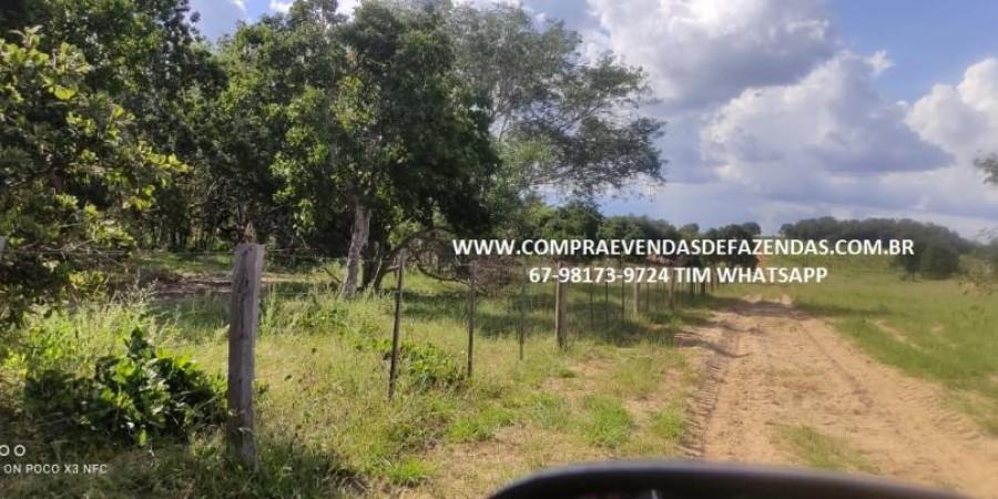 FAZENDA A VENDA NA REGIÃO POXORÉO MT - Foto 10 de 29