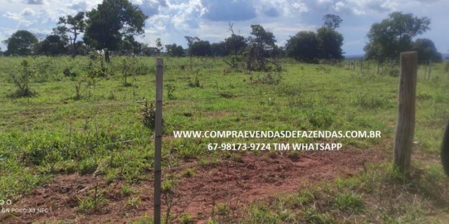 FAZENDA A VENDA NA REGIÃO POXORÉO MT - Foto 28 de 29