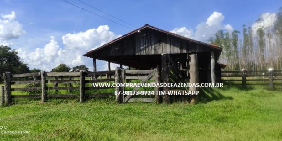 FAZENDA A VENDA NA REGIÃO POXORÉO MT - Foto 2 de 29