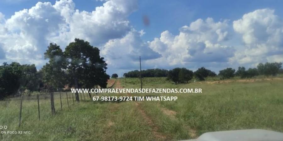 FAZENDA A VENDA NA REGIÃO POXORÉO MT - Foto 20 de 29