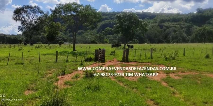 FAZENDA A VENDA NA REGIÃO POXORÉO MT - Foto 3 de 29