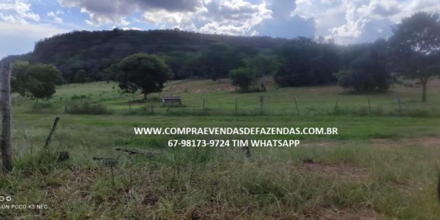 FAZENDA A VENDA NA REGIÃO POXORÉO MT - Foto 13 de 29