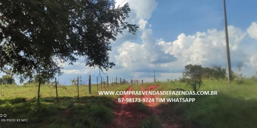 FAZENDA A VENDA NA REGIÃO POXORÉO MT - Foto 21 de 29