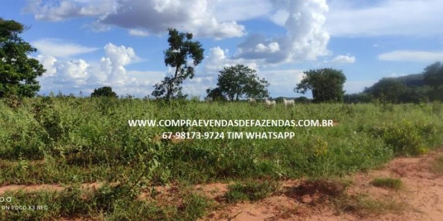 FAZENDA A VENDA NA REGIÃO POXORÉO MT - Foto 4 de 29