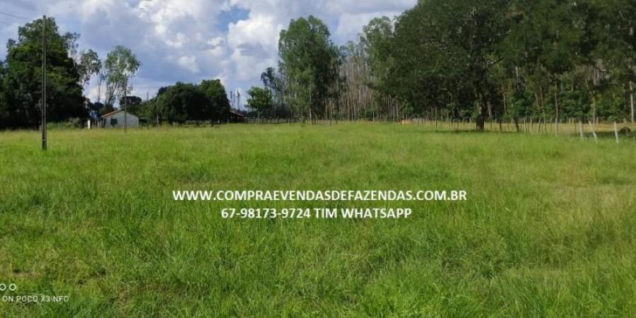 FAZENDA A VENDA NA REGIÃO POXORÉO MT - Foto 14 de 29