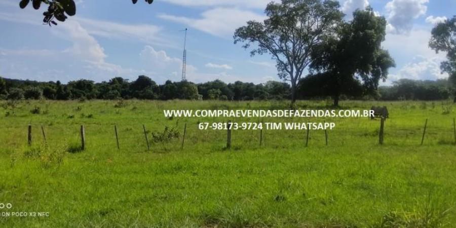 FAZENDA A VENDA NA REGIÃO POXORÉO MT - Foto 15 de 29