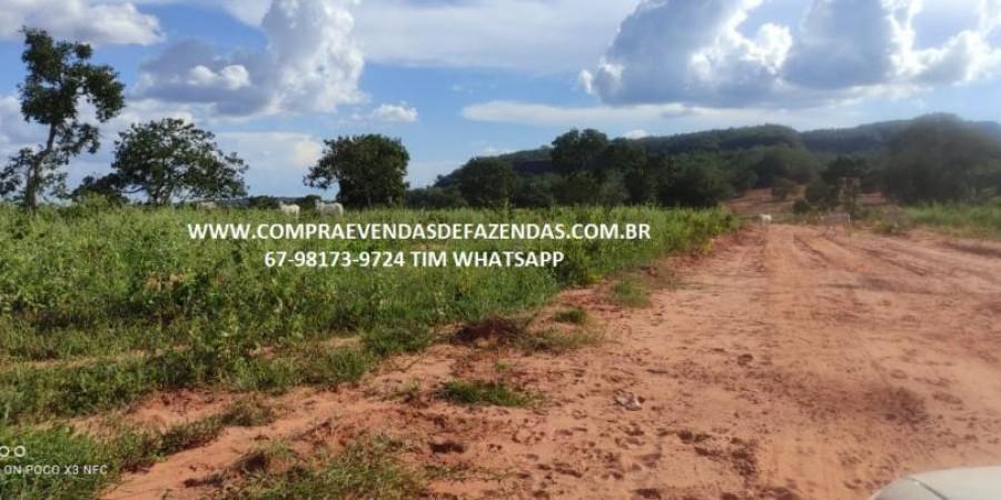FAZENDA A VENDA NA REGIÃO POXORÉO MT - Foto 6 de 29