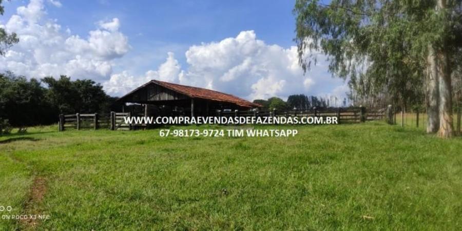 FAZENDA A VENDA NA REGIÃO POXORÉO MT - Foto 16 de 29