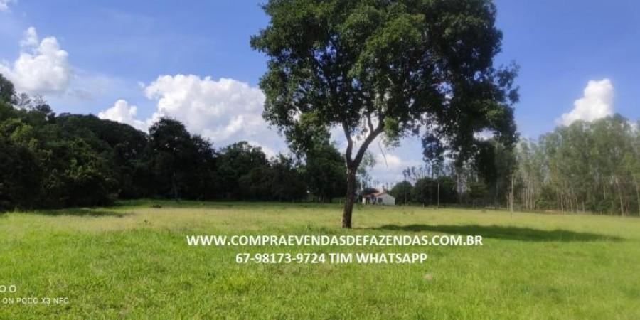 FAZENDA A VENDA NA REGIÃO POXORÉO MT - Foto 24 de 29