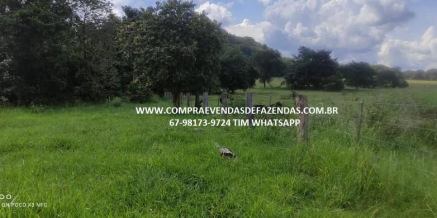 FAZENDA A VENDA NA REGIÃO POXORÉO MT - Foto 17 de 29