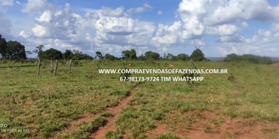 FAZENDA A VENDA NA REGIÃO POXORÉO MT - Foto 26 de 29