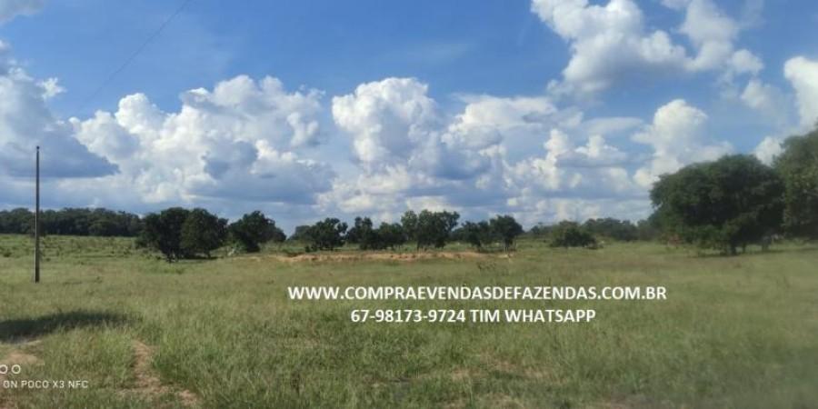 FAZENDA A VENDA NA REGIÃO POXORÉO MT - Foto 27 de 29