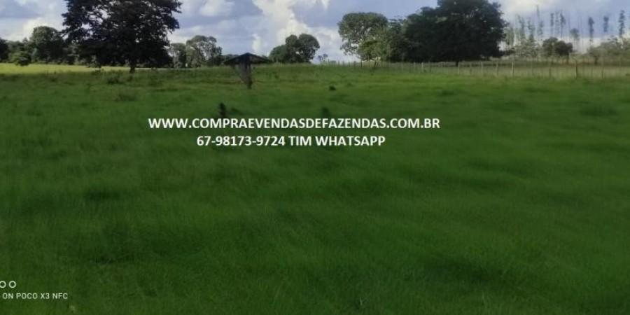 FAZENDA A VENDA NA REGIÃO POXORÉO MT