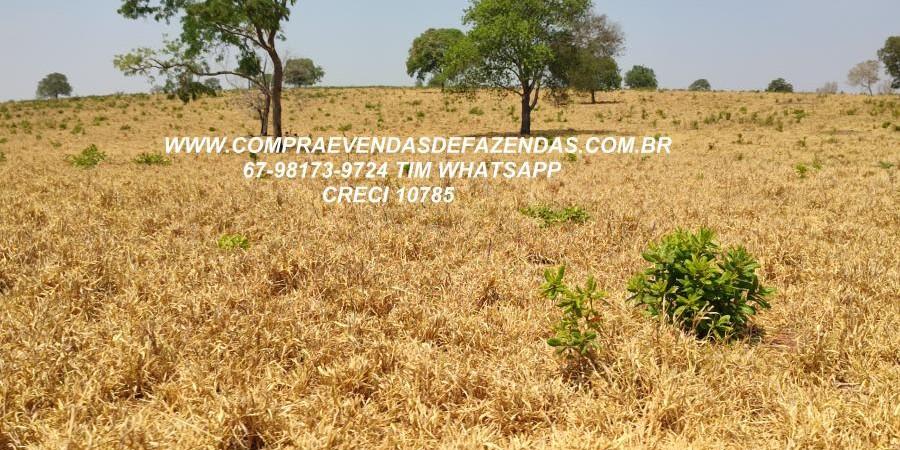 FAZENDA A VENDA  PONTAL DO ARAGUAIA MT - Foto 11 de 16