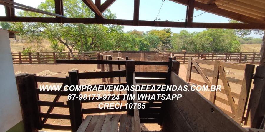 FAZENDA A VENDA  PONTAL DO ARAGUAIA MT - Foto 12 de 16