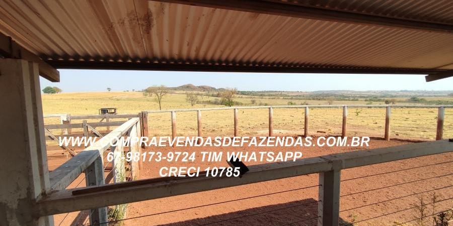 FAZENDA A VENDA  PONTAL DO ARAGUAIA MT - Foto 4 de 16