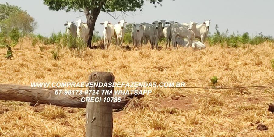 FAZENDA A VENDA  PONTAL DO ARAGUAIA MT - Foto 8 de 16