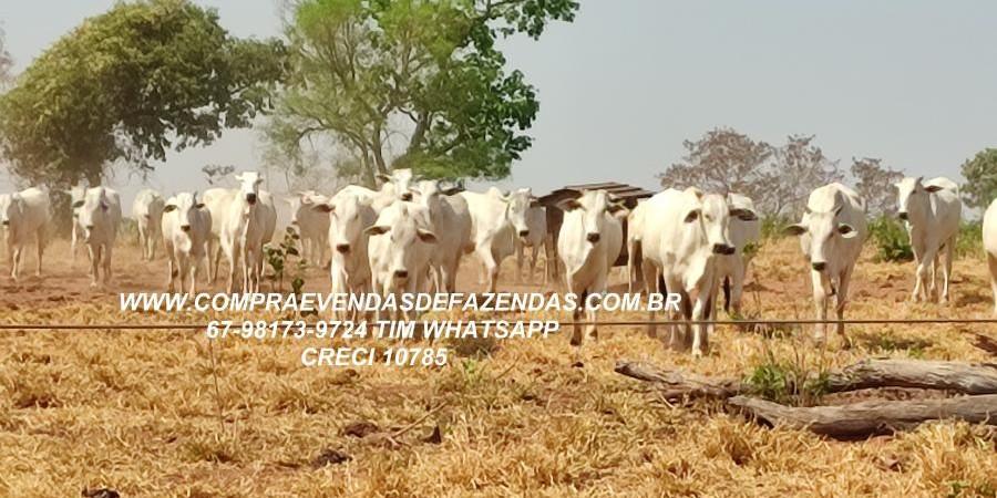 FAZENDA A VENDA  PONTAL DO ARAGUAIA MT - Foto 9 de 16