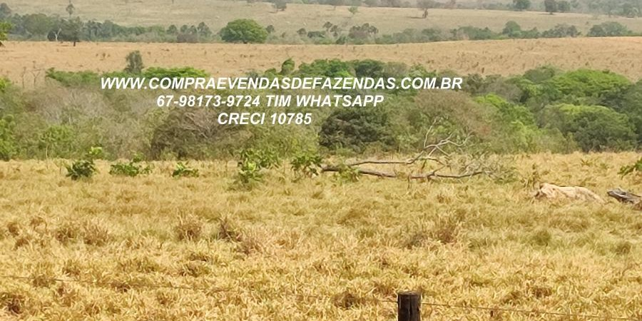FAZENDA A VENDA  PONTAL DO ARAGUAIA MT - Foto 10 de 16